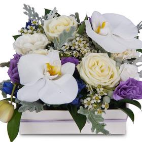 꽃상자 c760